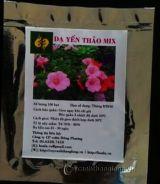 Hạt giống hoa Dạ yến thảo Mix