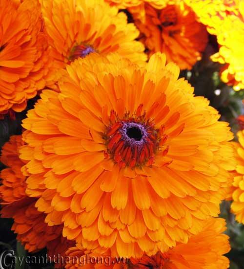 hoa của trời Hình ảnh nasa chụp các đợt phun trào nhật hoa hồi tháng năm, giai đoạn đỉnh cao trong chu kỳ 11 năm hoạt động của mặt trời.