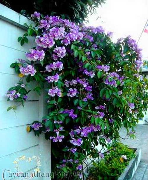 hoa lạ - hoa ánh hồng | hoala.vn
