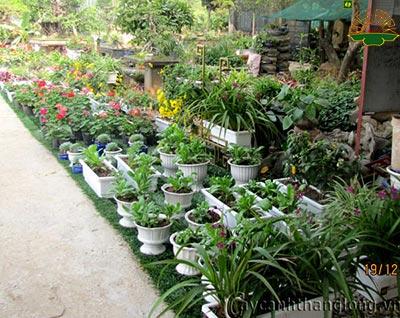 Shop hoa - giống cây trồng