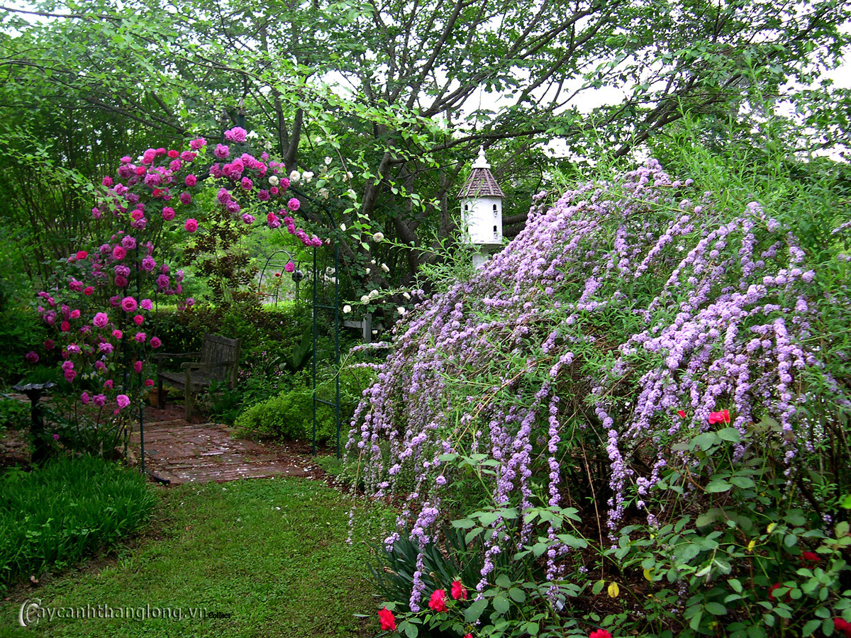 Những H 236 Nh ảnh đẹp Nhất Về Hoa Hồng Leo Ki 234 U Sa